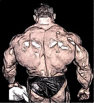Тренировка спины в тренажерном зале. Что мешает росту?