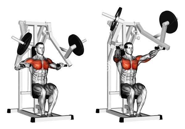тренажер хамме для грудных мышц