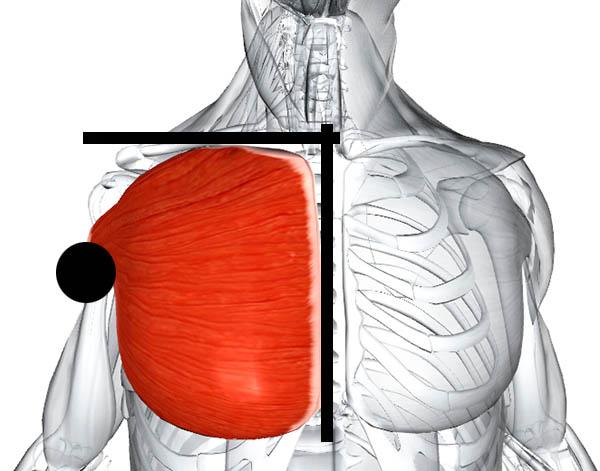 крепление грудных мышц Денис Борисов