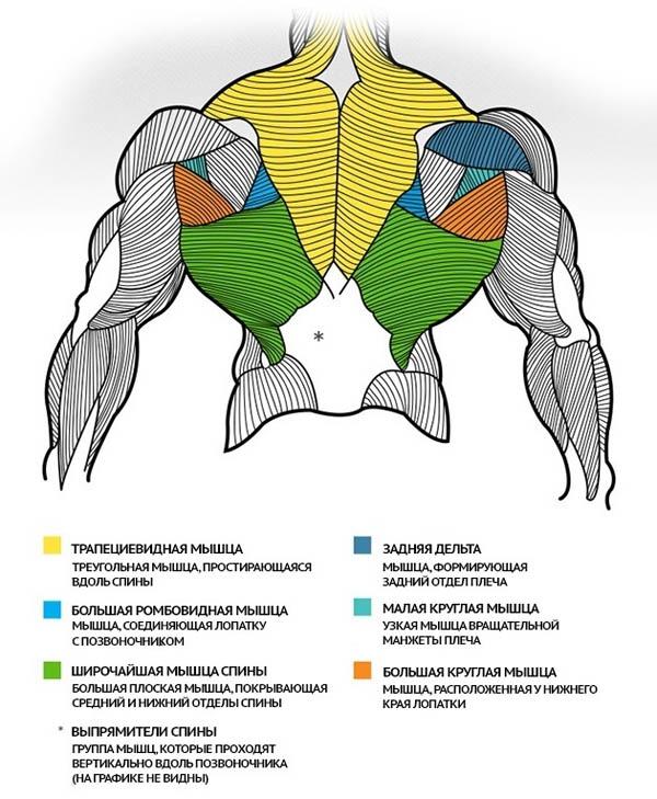 мышцы спины денис борисов