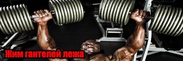ЖИМ ГАНТЕЛЕЙ ЛЕЖА НА СКАМЬЕ  упражнение для грудных мышц