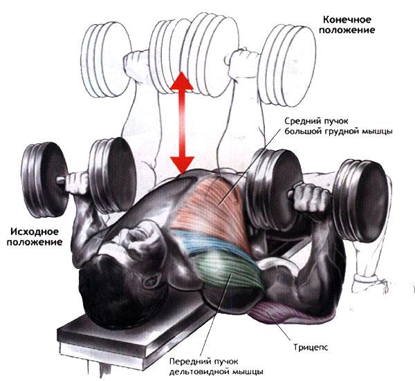 лучшее упражнение для тренировки грудных мышц